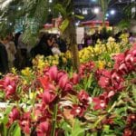 Visit Hawaii in Philly Next Week at the International Flower Show